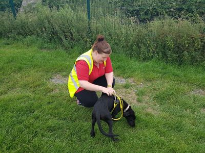 Fabienne Daniels helping out at a local animal rescue centre