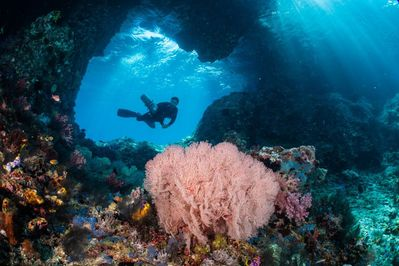 Eliane enjoying one of her many scuba dives. What an amazing experience!